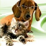 Ветеринарная клиника «Беладонна»