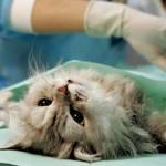 Ветеринарная клиника «Бемби»