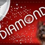 Зоосалон «Diamond»