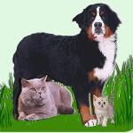 Ветеринарная клиника «Милосердие и гуманность»