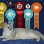 Награды на выставке кошек