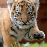 Ветеринарная клиника «Тигрёнок»