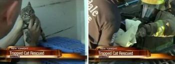 В Аризоне спасли котёнка, упавшего в ливневый сток