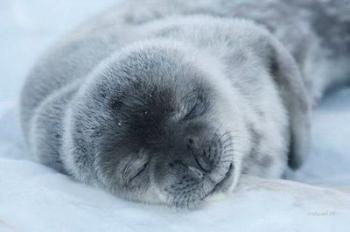 Спящие забавные животные