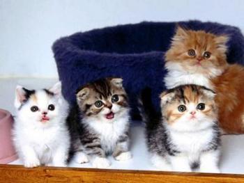 Ликбез при покупке котёнка