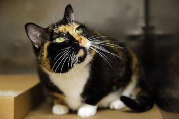Кошка по кличке Уиллоу 5 лет добиралась из Колорадо в Нью Йорк