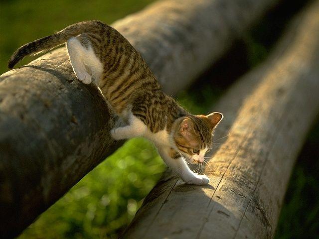 Гимнаст на брёвнах