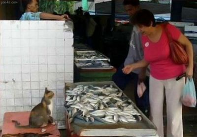 По чём рыбка?