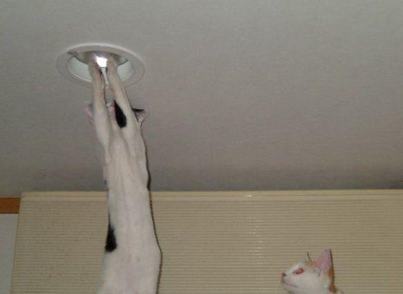 Меняют лампочки