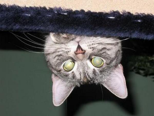 Что ты делаешь под диваном?