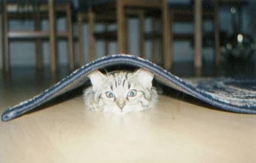 Спрятался