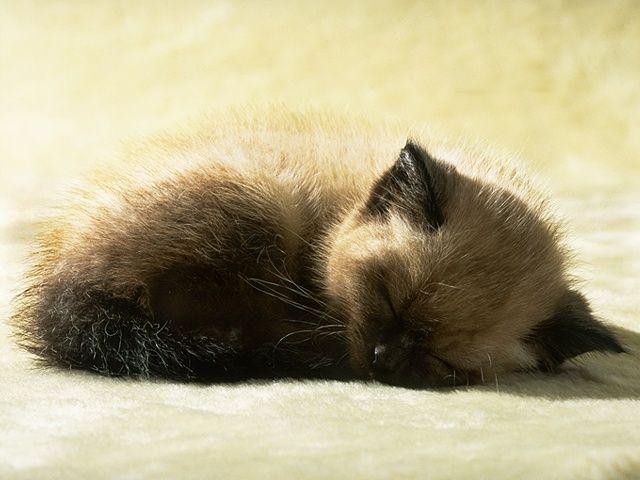 Уснул