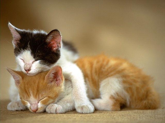 Удобно спим