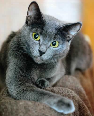 Имена котов и кошек русские